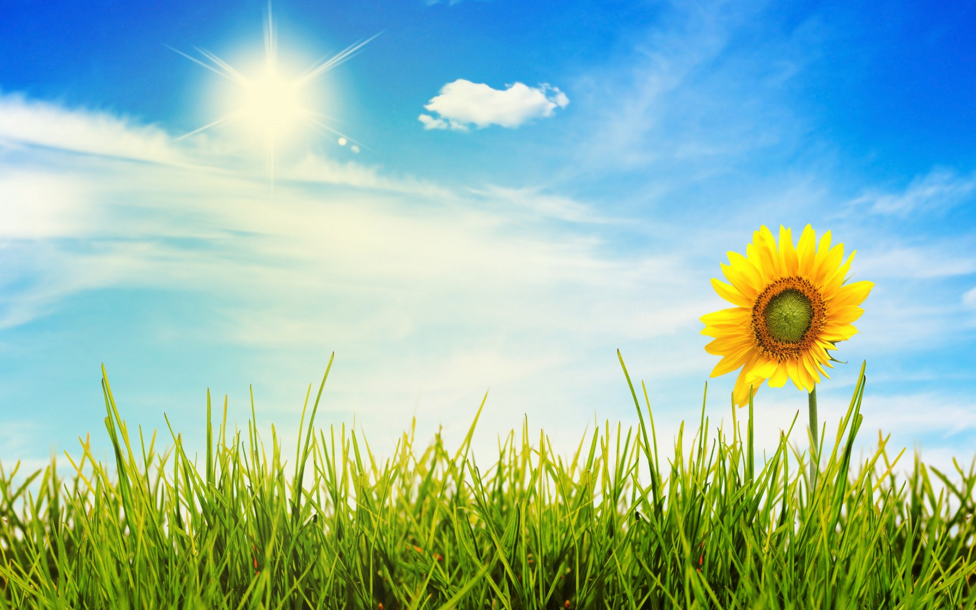 813639-free-sunny-day-wallpaper